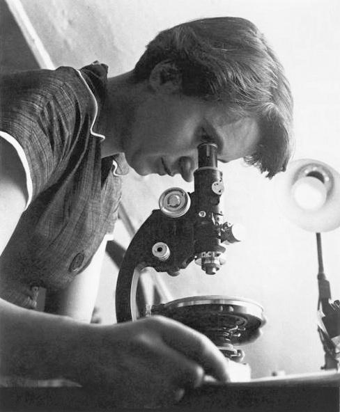 Fotografie von Rosalind Franklin, wie sie durch ein Mikroskop sieht