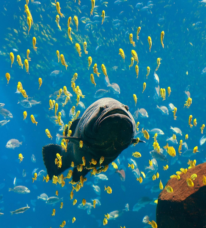 Knochenfisch dient als Beispiel für Bionik