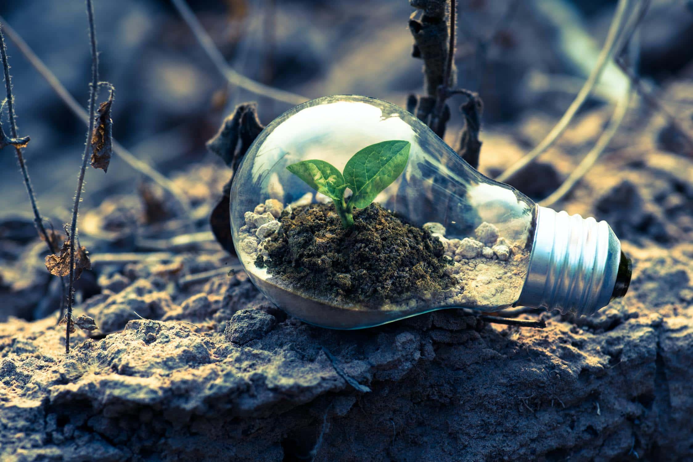 In Glühbirne wachsende Pflanze
